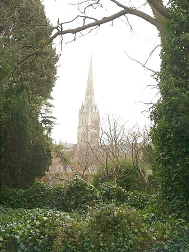 Salisbury Cathedral through the trees