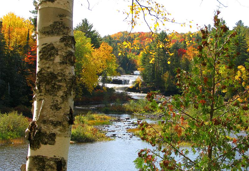 Tahquamenon Falls in autumn with birch tree